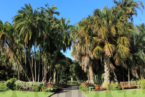 Royal Botanic Gardens-14