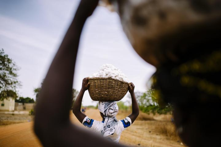 cotton-harvesters-2.jpg